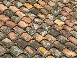 Cómo limpiar el musgo de paredes o techos?