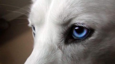 ojos perro