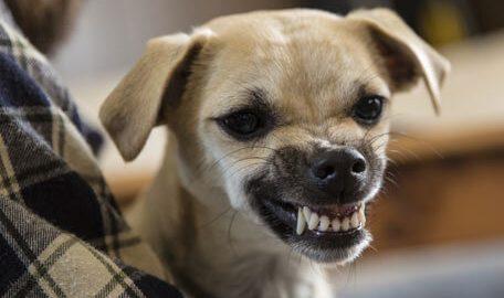 perro dientes