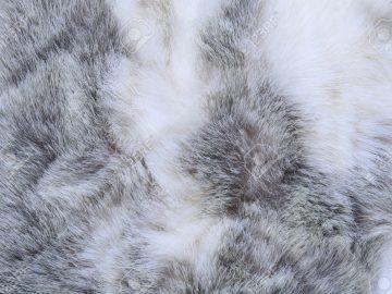 macro texture gray rabbit fur studio