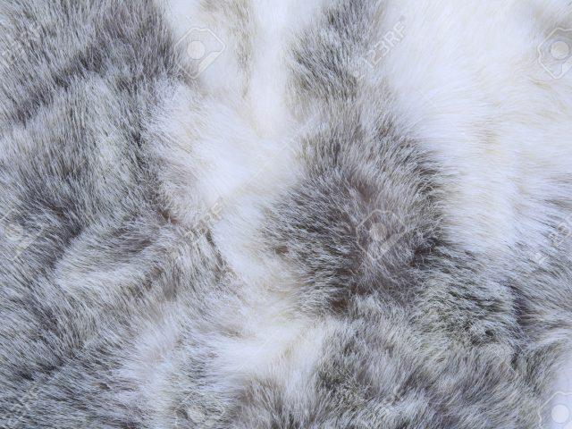 en venta 151c1 be455 Cómo limpiar una prenda de piel de conejo?