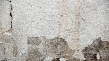 paredes hongos