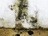 Cómo limpiar hongos de humedad de las paredes?