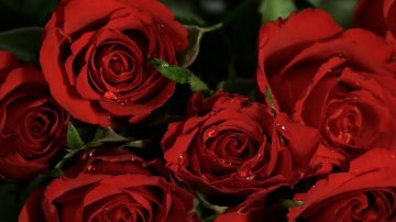 Blossom Red Rose Flowers Bloom Roses Rose Blooms