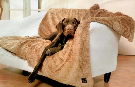 C mo limpiar y quitar el olor a perro de la casa - Como limpiar la casa a fondo ...