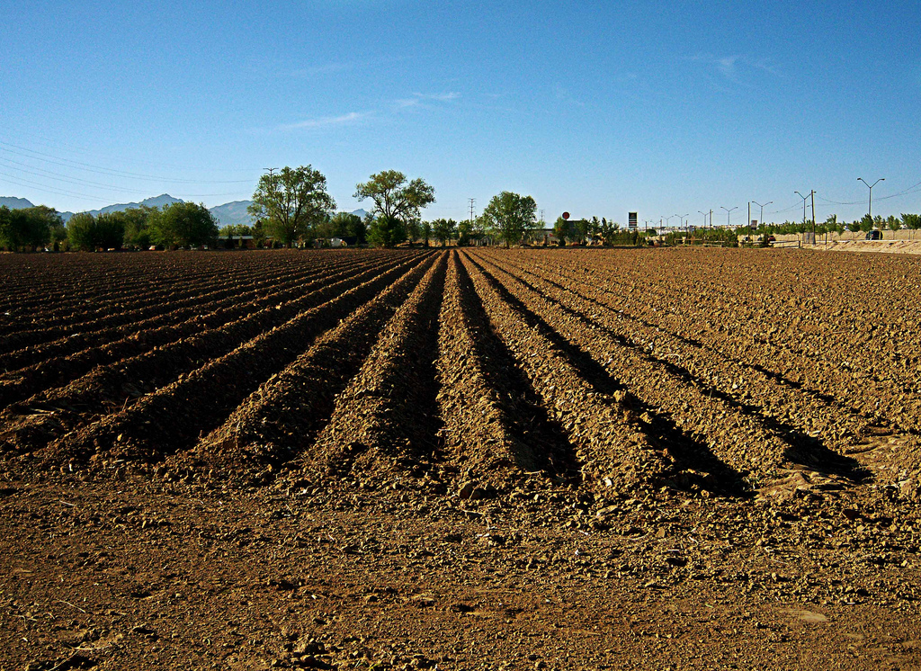 El jard n de aprende a cultivar no esta terminado for Como esta constituido el suelo