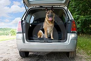 Como quitar y limpiar el pelo de perro del tapizado del auto?