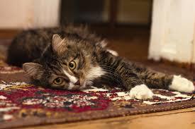 C mo limpiar manchas de orina en alfombras - Como limpiar alfombras en seco ...
