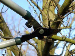 Cómo limpiar o podar un árbol para su mantenimiento?