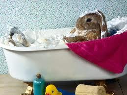 Cómo limpiar/bañar un conejo?