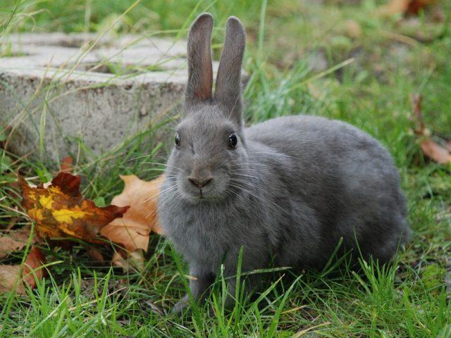 C mo limpiar ba ar un conejo - Casa conejo ...