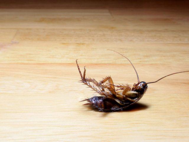C mo limpiar eliminar las cucarachas de tu casa de forma for Como eliminar cucarachas pequenas en casa