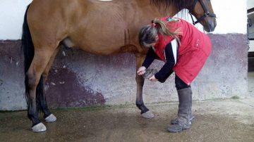 como-limpiar-un-caballo