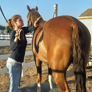 Cómo limpiar un caballo?