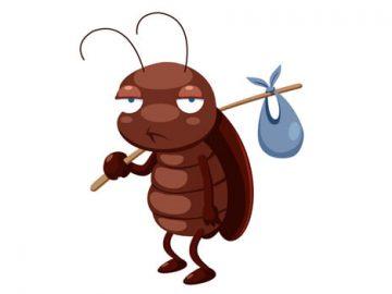 Cucarachita1
