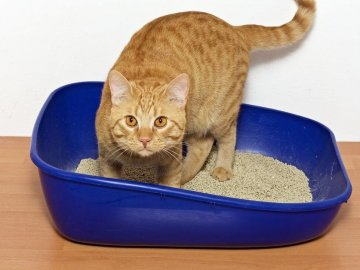 caja-arena-gato
