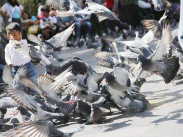 palomas_en_la_plaza_de_armas_de_arequipa